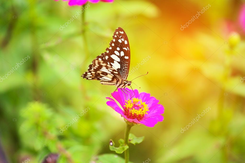 Butterfly In Garden And Flying To Many Flowers In Garden, Beautiful Butterfly  In Colorful Garden Or Insect Farm, Animal Or Insect Life In The Nature And  ...