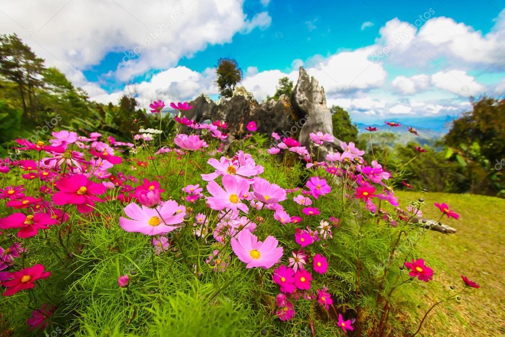 Image result for 화려한 꽃