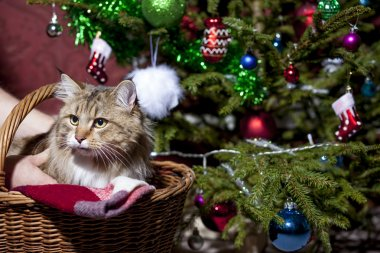 Cat in a basket under the Christmas tree