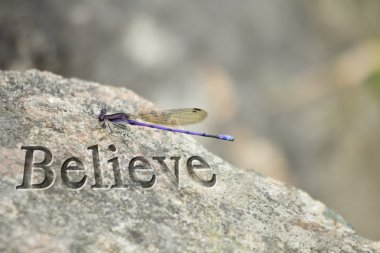 Purple Dragonfly Rock Believe