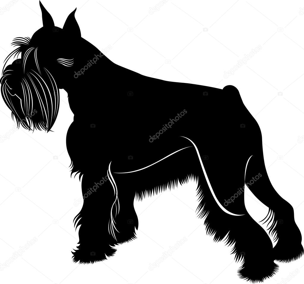 Vector set of silhouettes of pug, French bulldog,