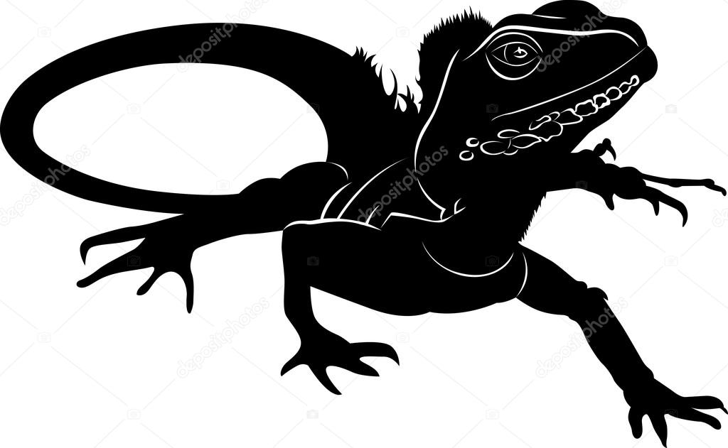 iguana lizard black and white side view illustration