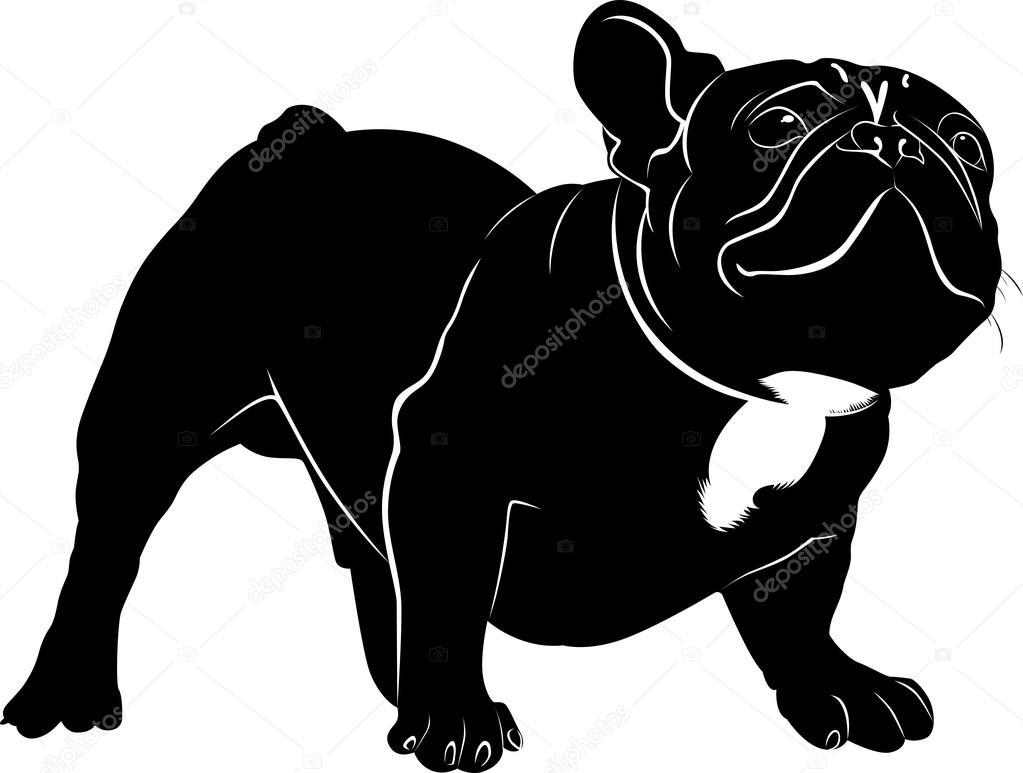 Dog Bulldog. The dog breed bulldog.Dog Bulldog black silhouette