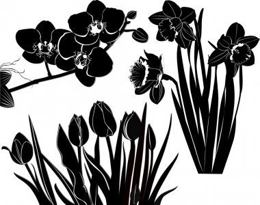 Silhouettes of tulips ,daffodils  and orchid