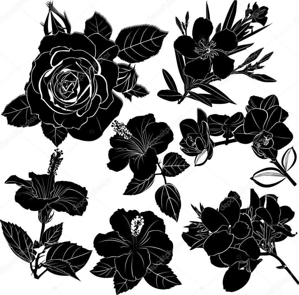 Conjunto De Flores Negras Archivo Imágenes Vectoriales Weter777