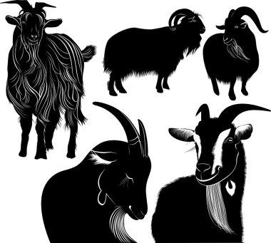 goats farm animals