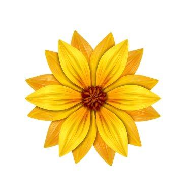 Blooming garden flower