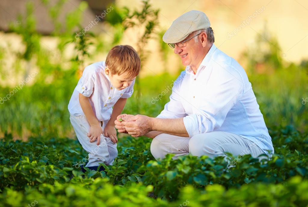 grandfather explains grandson the nature of plant growth