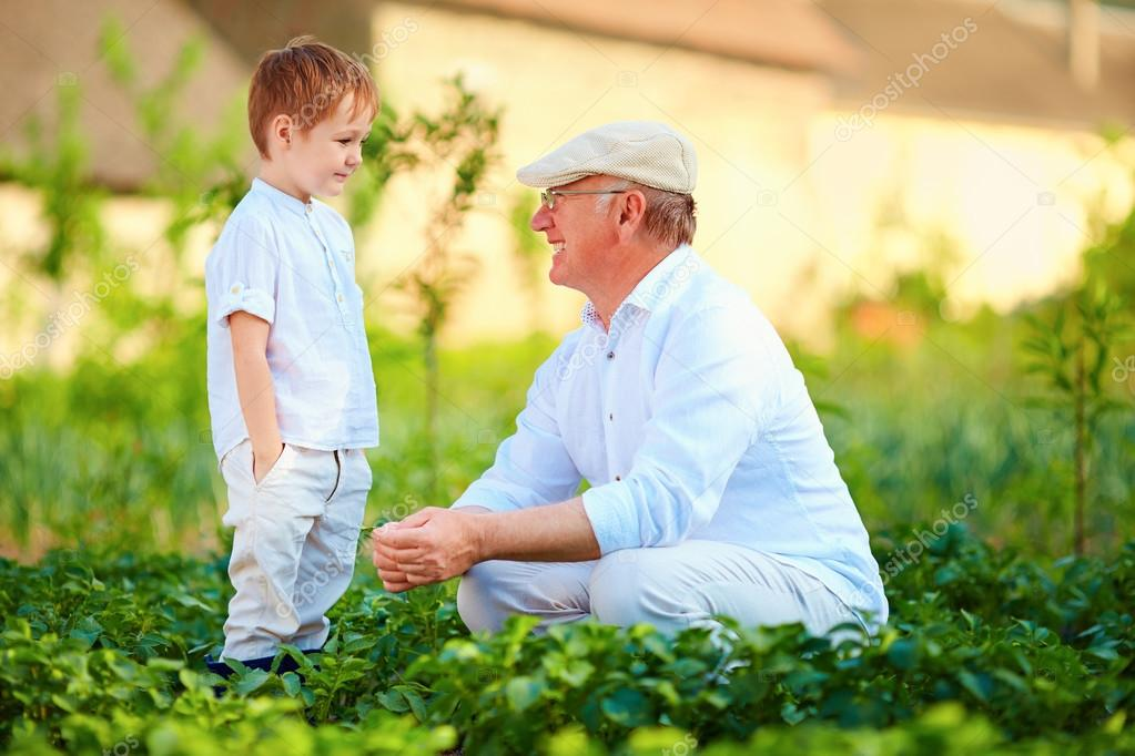 grandfather and grandson among the potato rows at their homestead