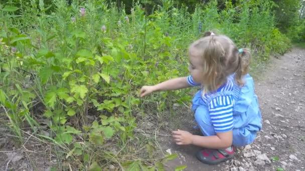 malá holčička sbírá jahody jahody v lese