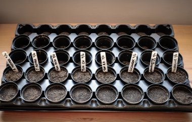 Grow your own salad and vegetables - Rows of seed pots