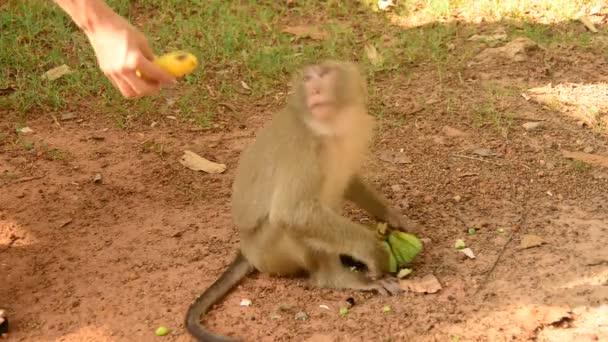 Monkey Eating Lotus Seeds