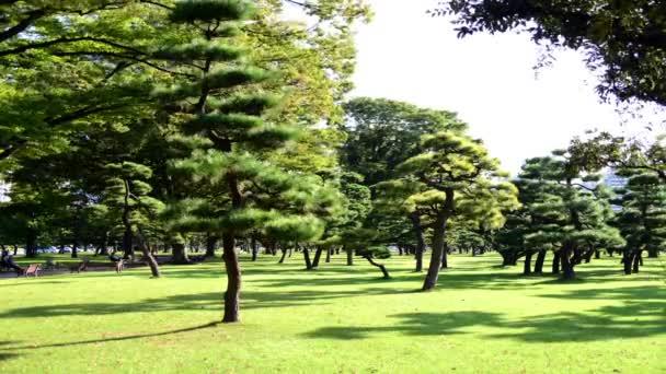 Stromy v císařské zahradě