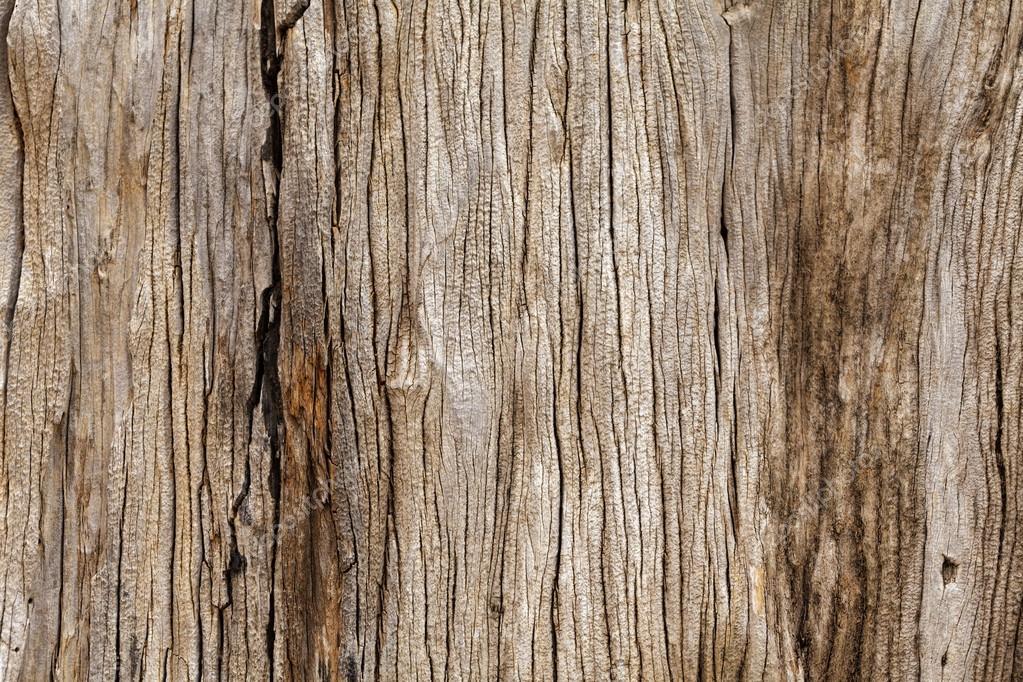 Fondo textura madera rustica textura de madera r stica foto de stock dnaumoid 86231416 - Cosas de madera rusticas ...