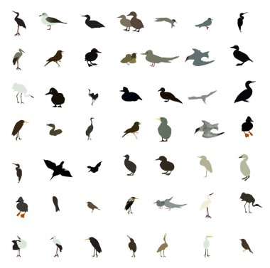 Set of black and white silhouettes of birds: dove, duck, gull, p