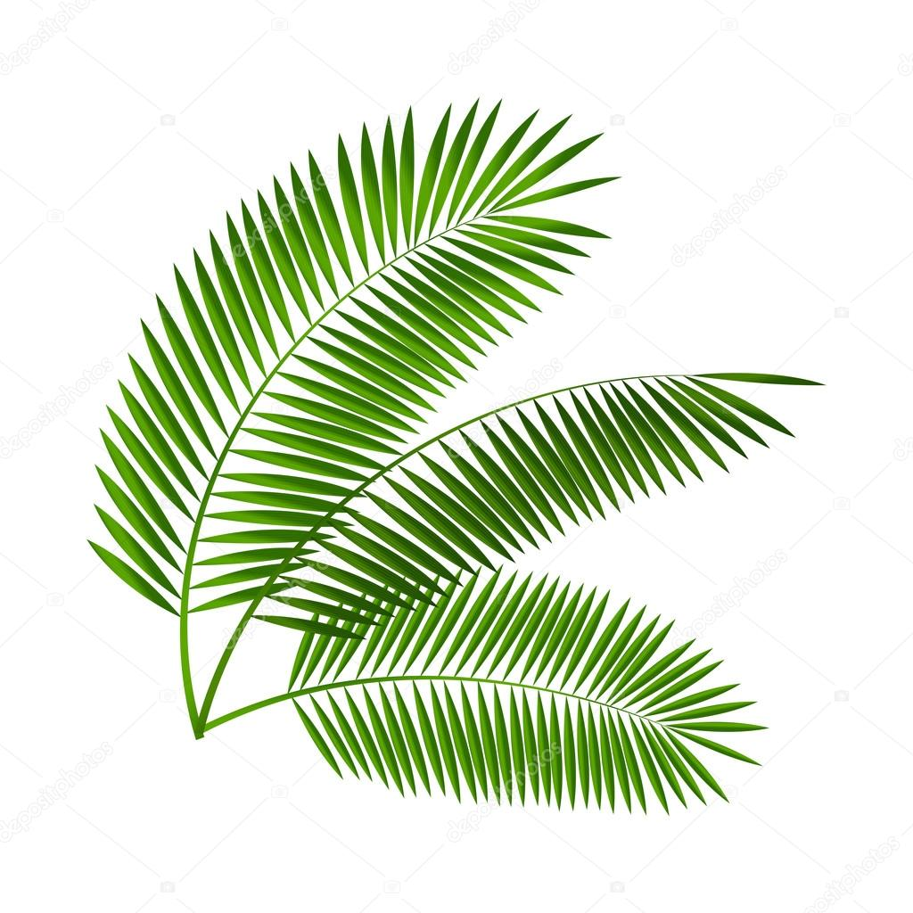 palm leaf vector illustration stock vector oleggankod 72806059 rh depositphotos com palm tree leaves vector png palm tree leaf vector free