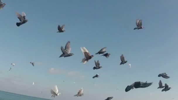 nyáj galamb repült fel az égbe