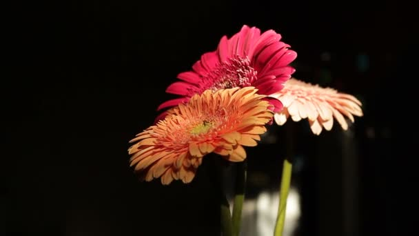 Bouquet of gerbera flowers, the camera moves around