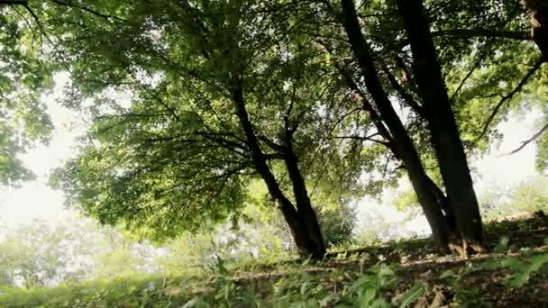 Fák az erdőben
