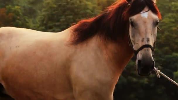 koně, klisna na pastvině