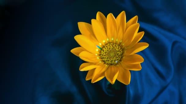 žlutý květ kvete