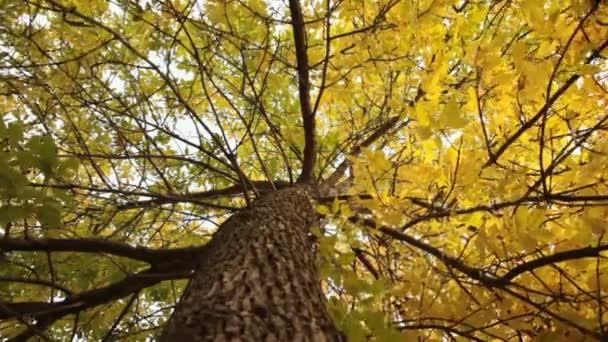 Stamm des Baumes gelb