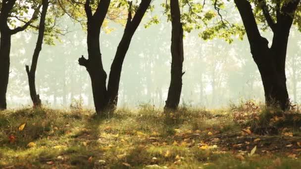 Mlha v lese listy pozadí