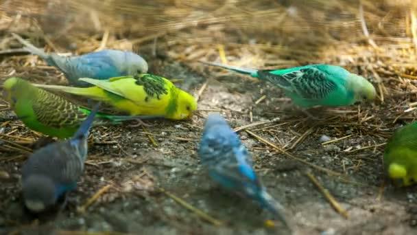 színes papagájok hierarchia feed