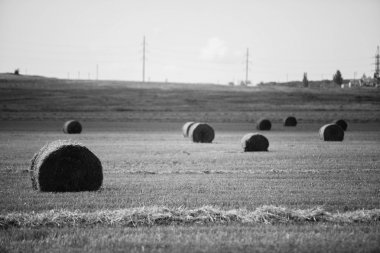 sheaves of black-and-white photo