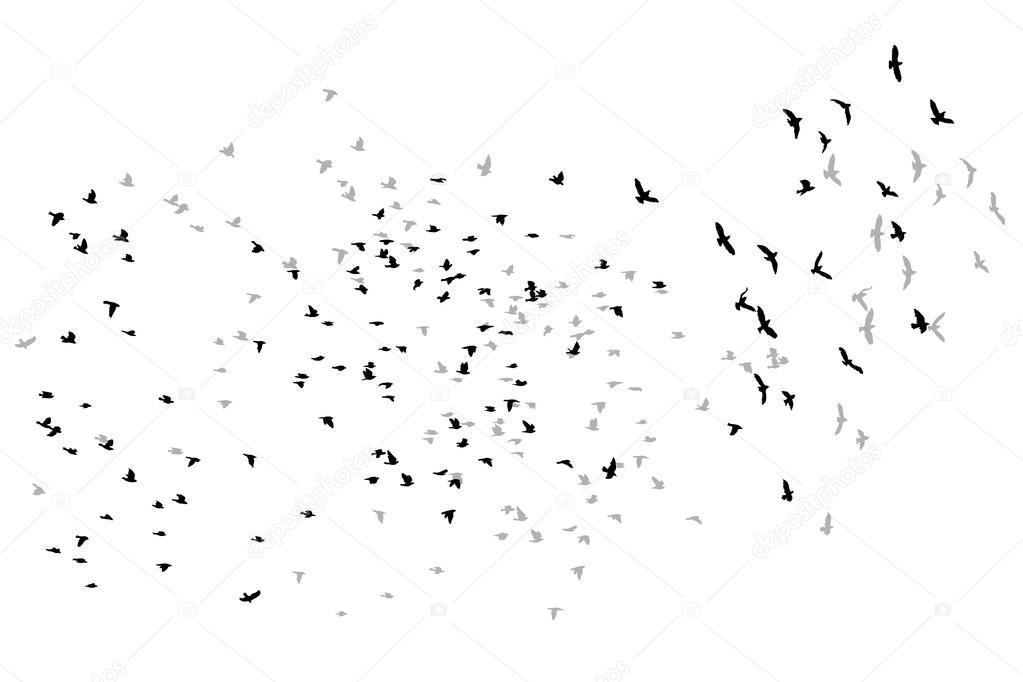 Amado pássaros voando de desenho de vetor de aves — Vetores de Stock  XO25