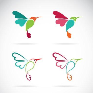 Vector image of an hummingbird design on white background, Logo,