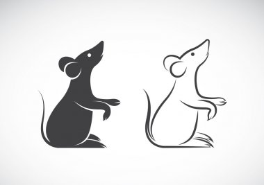 Vector image of an rat design on white background