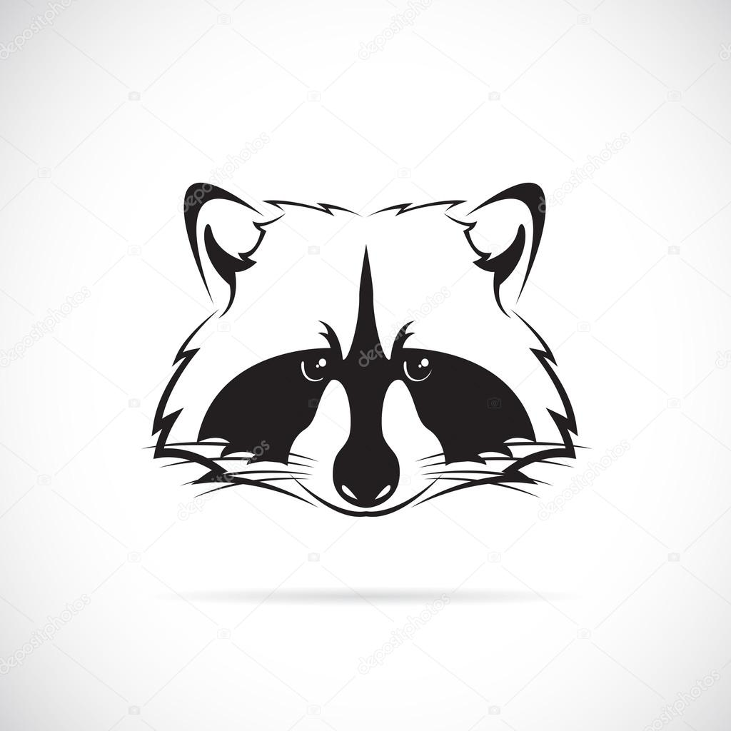 Vector image of a raccoon face on white background — Stock ... Raccoon Face Illustration