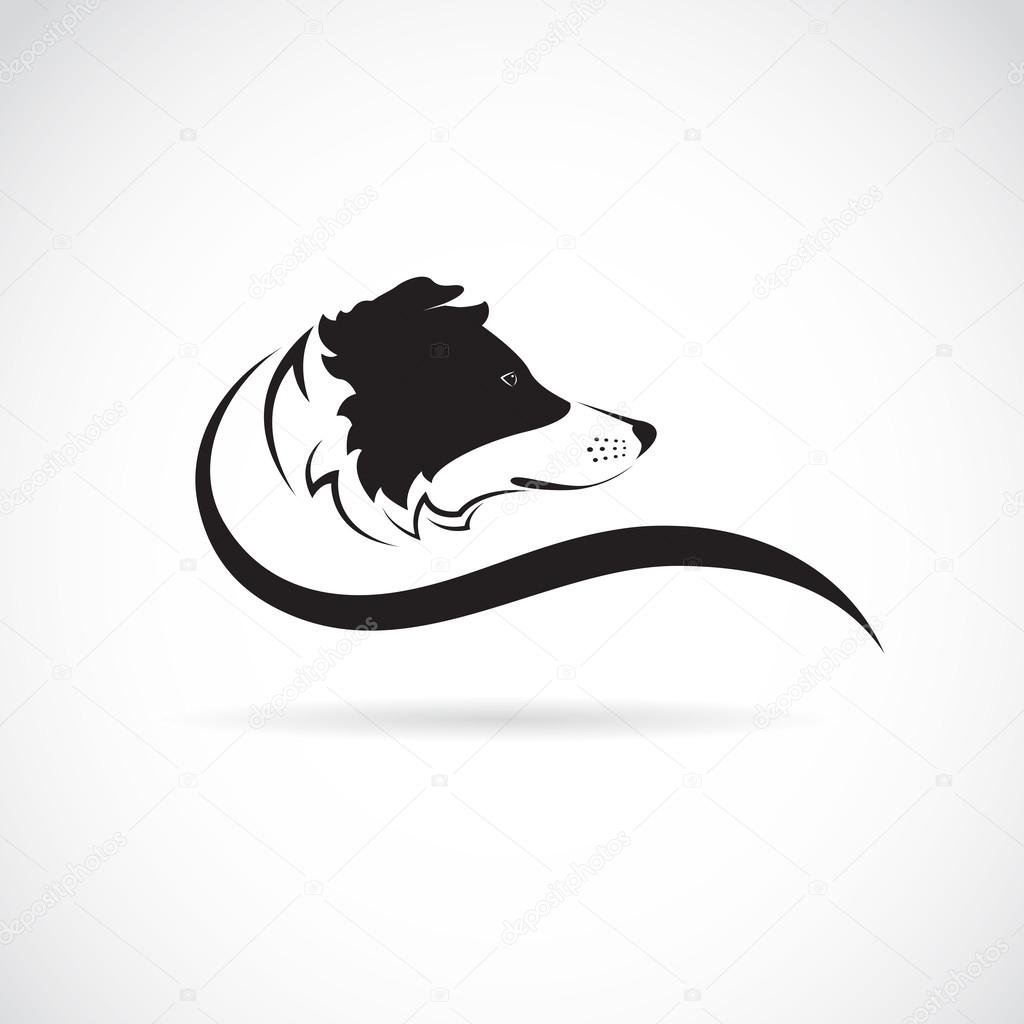 Vector image of an border collie dog on white background