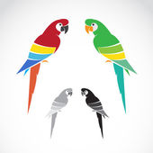 Vector image of a parrot on white background.