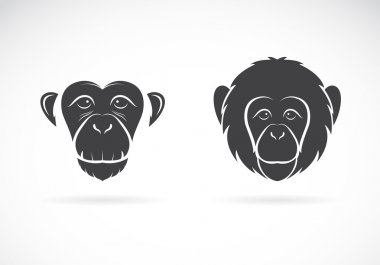 Vector image of monkey face