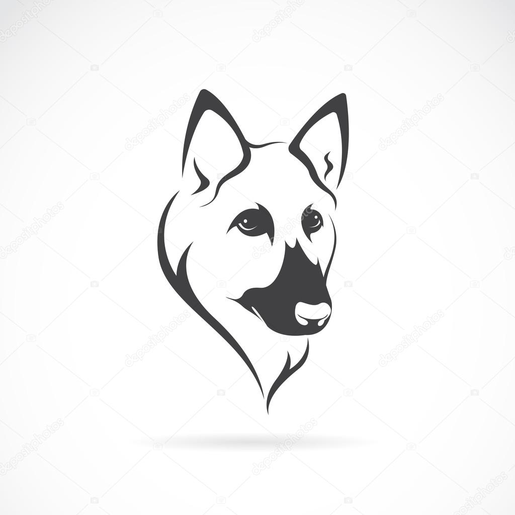 Line Drawing Of A Dog S Face : Vector image of an german shepherd face on white