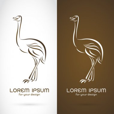 Vector image of a ostrich design on white background and brown b