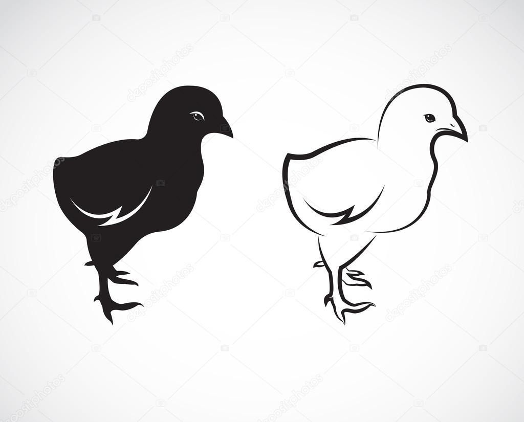 Vector image of an chick design on white background