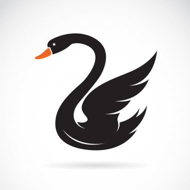 Vector image of swans on white background.