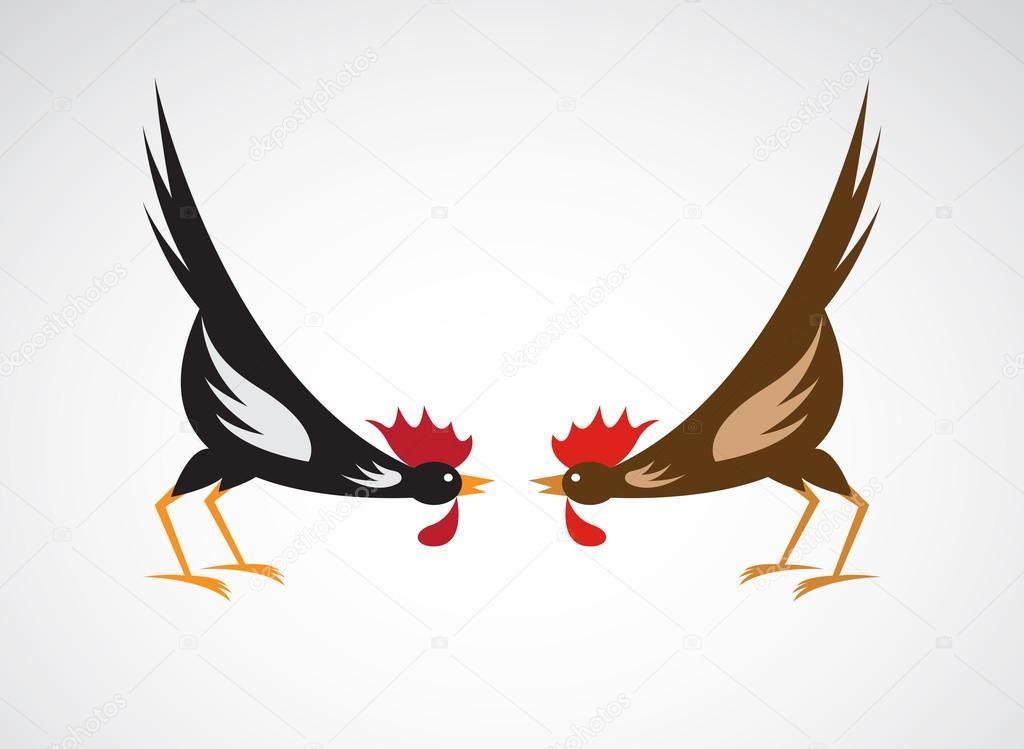 Vector image of an fighting cock on white background