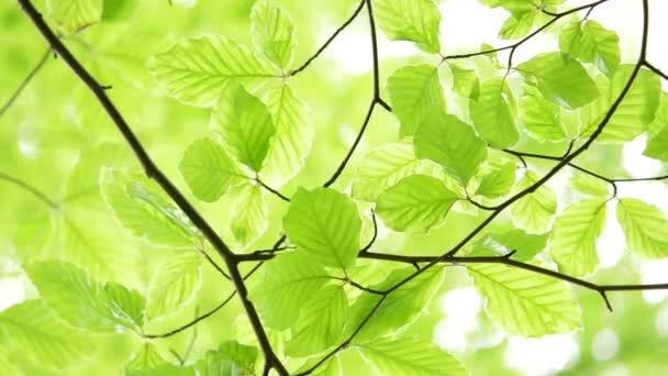 grünes Licht hinterlässt natürlichen Hintergrund