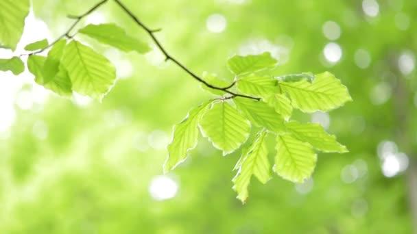 Světle zelené listy přirozené pozadí.