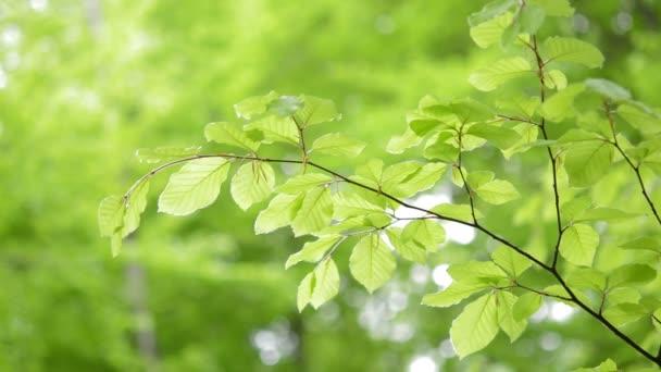Világoszöld levelek természetes háttér.