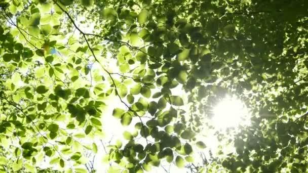 Slunce svítí skrz větve stromů.