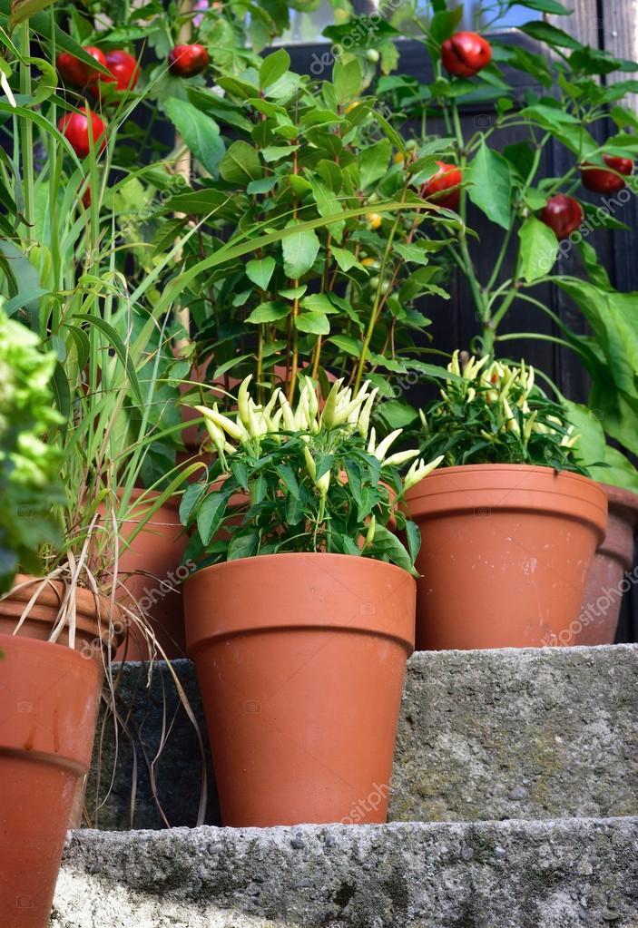 Kontener Ogród Warzywa Rośliny W Doniczce Zdjęcie Stockowe Geo