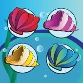 mořské mušle - sada čtyř elementů