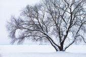 strom a oblasti pokryté sněhem