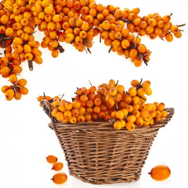 Wicker basket full sea buckthorn berries isolated on white background stock vector