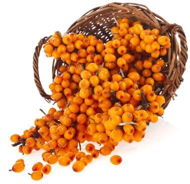 Basket full of sea buckthorn berries